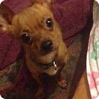 Adopt A Pet :: Bruno - Allen, TX