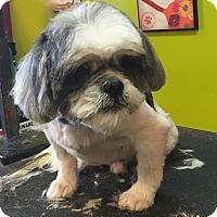 Adopt A Pet :: Teddy - Bridgeton, MO