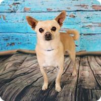 Adopt A Pet :: Taco - Yucaipa, CA