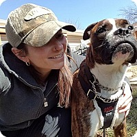Adopt A Pet :: Bosco - Hamilton, ON