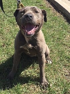 Terrier (Unknown Type, Medium) Mix Dog for adoption in Detroit, Michigan - Platinum