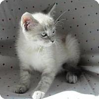 Adopt A Pet :: Helena - Milwaukee, WI