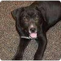 Adopt A Pet :: Graham (pending adoption) - Adamsville, TN