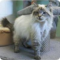 Adopt A Pet :: Augie - Columbus, OH