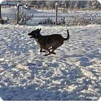 Adopt A Pet :: Bosco - Hamilton, MT