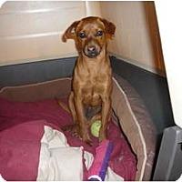 Adopt A Pet :: Eddy - Pointblank, TX