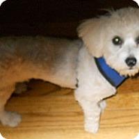 Adopt A Pet :: Nicky - dewey, AZ