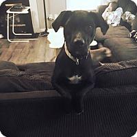 Adopt A Pet :: Lola - Chesterfield, VA