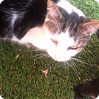 Adopt A Pet :: Lilo - Medford, NY