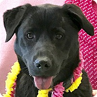 Adopt A Pet :: Gypsy - Evansville, IN