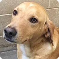 Adopt A Pet :: Bud - Springdale, AR