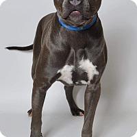 Adopt A Pet :: Marcy - Ogden, UT