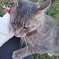 Adopt A Pet :: Dago - Columbus, OH