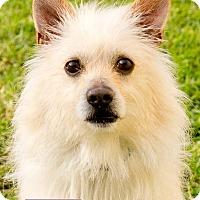 Adopt A Pet :: Fone - Marina del Rey, CA
