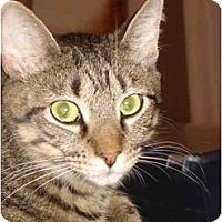 Adopt A Pet :: Gringo & Gomez - Chesapeake, VA