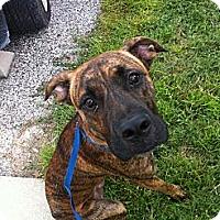 Adopt A Pet :: Maverick - Orlando, FL