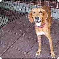 Adopt A Pet :: Flame - Alexandria, VA