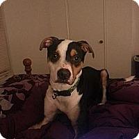 Adopt A Pet :: Walter - Greenville, SC