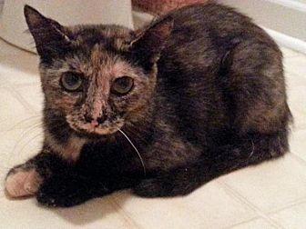 Calico Cat for adoption in Greer, South Carolina - Garnet
