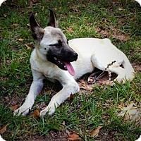 Adopt A Pet :: Baxter - Fort Valley, GA