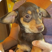 Adopt A Pet :: Javier - Greenville, RI