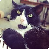 Adopt A Pet :: Sylvester - Vancouver, BC