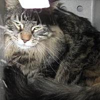 Adopt A Pet :: Bast - Roseville, CA