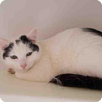 Adopt A Pet :: Sundae - Fairfax, VA
