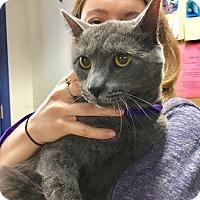 Adopt A Pet :: Merlin - Washington, DC