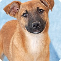 Adopt A Pet :: Sweet William - Encinitas, CA