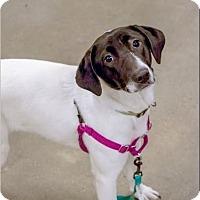 Adopt A Pet :: Sissy - playful & cuddly - Madison, TN