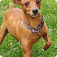Adopt A Pet :: Sy - Lisbon, IA
