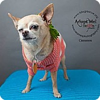 Adopt A Pet :: Singer Cinnamon - Shawnee Mission, KS