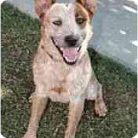 Adopt A Pet :: Diego *Adopted* - Phoenix, AZ