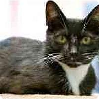 Adopt A Pet :: Vincent - Marietta, GA