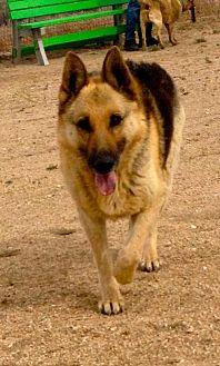 German Shepherd Dog Dog for adoption in Lancaster, California - Lady