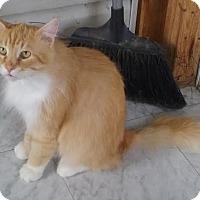 Adopt A Pet :: Hulk - Delmont, PA