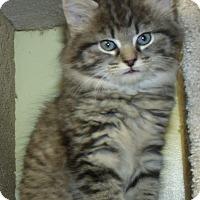 Adopt A Pet :: SEVILLE - Acme, PA