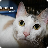 Adopt A Pet :: Willamena - Springfield, PA
