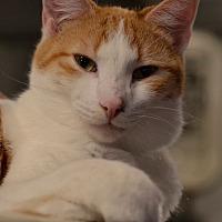Adopt A Pet :: Sketcher - Geneseo, IL