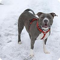 Adopt A Pet :: Ocean - Salt Lake City, UT