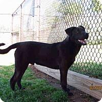 Adopt A Pet :: SAMMIE - Grovetown, GA