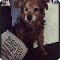 Adopt A Pet :: Clover - Wilmington, DE