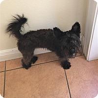 Adopt A Pet :: Julianna - Tavares, FL