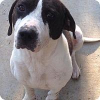 Adopt A Pet :: Tucker - Valley Falls, KS