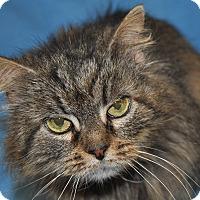Adopt A Pet :: Tara - Windsor, VA