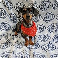 Adopt A Pet :: BAMA - Sterling, MA