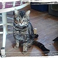 Adopt A Pet :: Tucker - london, ON
