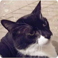 Adopt A Pet :: Felix - Kensington, MD