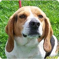Adopt A Pet :: Queenie PENDING - Indianapolis, IN